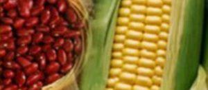 La combinación de maíz con frijol es una excelente fuente de proteínas