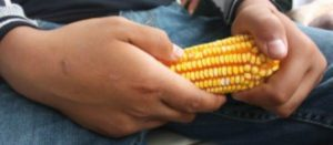 Consume alimentos de la milpa sembrados por campesinos mexicanos