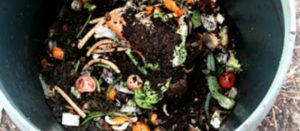 ¡Cuida el suelo y el ambiente! Beneficios de la composta