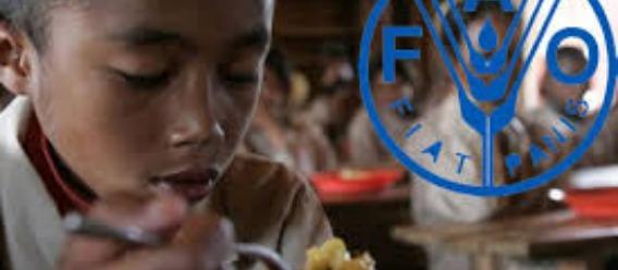 Demandan a FAO participacion de sociedad civil en definición de políticas públicas en materia de nutrición y salud alimentaria