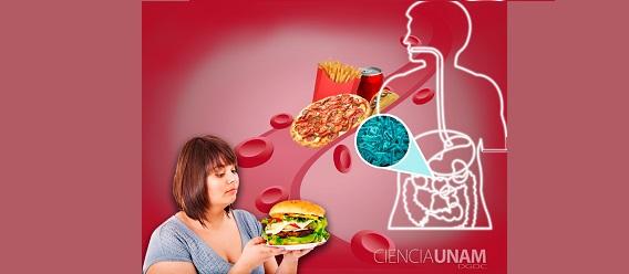 Microbiota ¿causa obesidad?