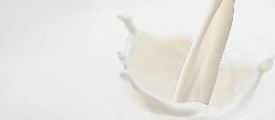 Descubre los azúcares que hay en la leche