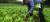 Gran aporte de pequeña agricultura al medio ambiente