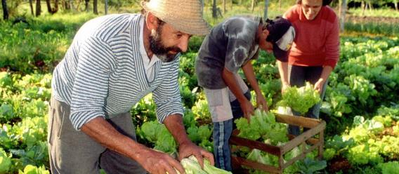 Solicitan a AMLO no apoyar a Geslain-Lanéelle para presidir la FAO