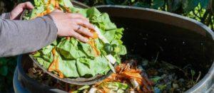 México desperdicia el 37% de su comida