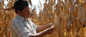 En México alcanzar la autosuficiencia alimentaria en granos es posible
