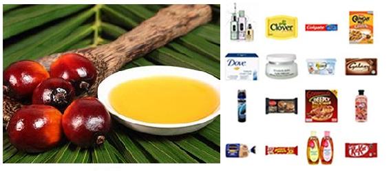 ¿Por qué el aceite de palma daña el ambiente y tu salud?