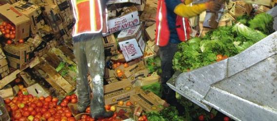 Alimentos en la basura
