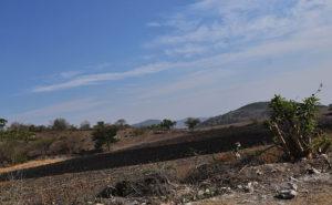 campo-mexicano-obeso-clima-seco