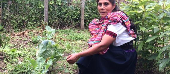 La agricultura sostenible, productiva y resiliente frente al cambio climático