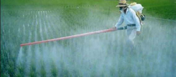 Acepta gobierno llamado a prohibir los plaguicidas vetados en otros países