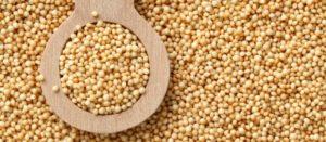 Amaranto, estratégico para garantizar alimentación en la capital