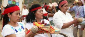 Tribunal mantiene suspensión para siembra de maíz transgénico en México