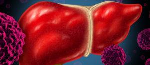 Ilustración del hígado