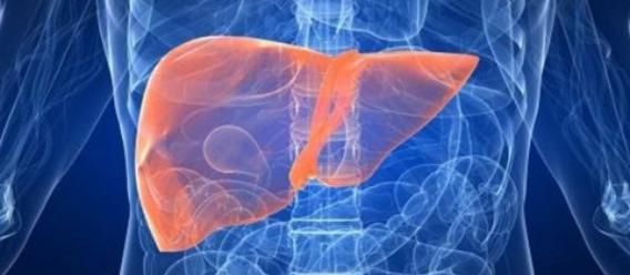 Ilustración a manera de radiografía donde se distingue el hígado