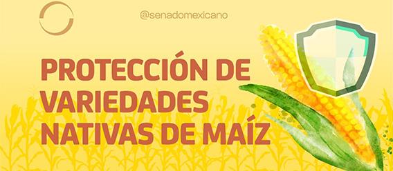 Banner del Senado de la República con la leyenda Protección de variedades nativas de maíz