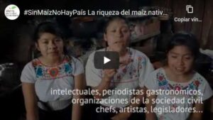 La riqueza del maíz nativo en México ahora está protegida por la ley