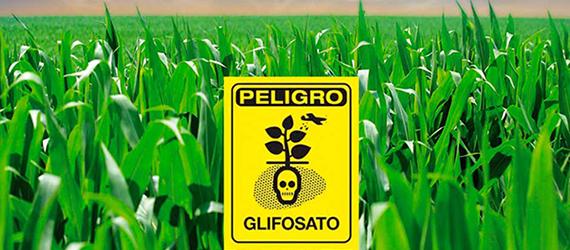 Sembradío de maíz con un cartel de advertencia que dice peligro Glifosato