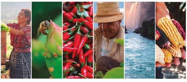Imagen de la portada del documento Postura de organizaciones de la sociedad civil mexicana frente a la Cumbre sobre Sistemas Alimentarios de Naciones Unidas